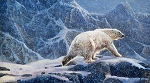 NORTHERN SOLITUDE,POLAR BEAR PANEL, BY NORTHCOTT
