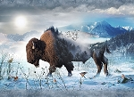 CALL OF THE WILD , BISON,BY HOFFMAN