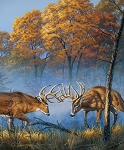 NATURE'S FINEST, 36'' DEER PANEL, BY RILEY BLAKE DESIGNS